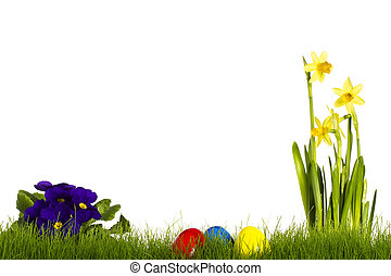 three easter eggs with purple primula and daffodil on white...