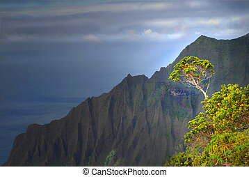 Tree growing on a mountain on the Napali coast - Tree...
