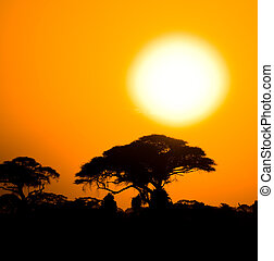 african sunset in savannah, kenya