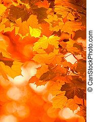 Outono, folhas, muito, Raso, foco