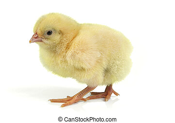 小雞, 復活節