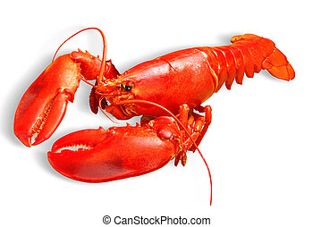 lobster - Red lobster isolated on white background with path