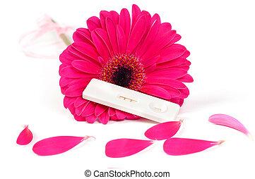 Positive pregnancy test and gerbera - Shot of positive...