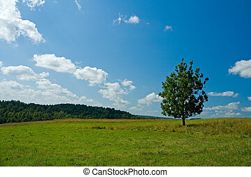 lonely tree in a green field