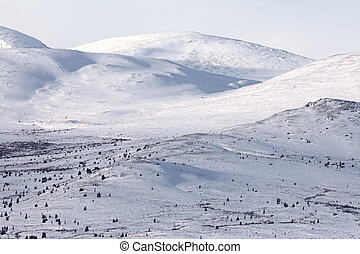 Alpine tundra in winter, Yukon Territory, Canada.