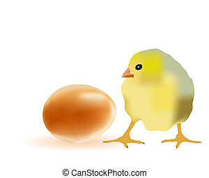 Egg and chicken on a white background