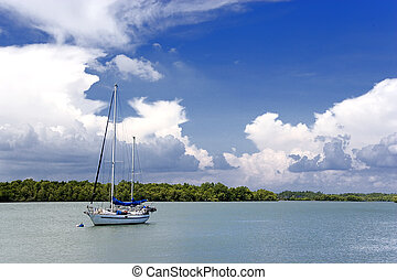 Yacht and Mangrove Swamp - Yacht and mangrove swamp in...