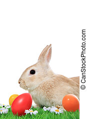 Easter bunny - Cute little easter bunny on green meadow with...