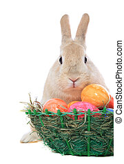Easter bunny with basket - Cute little easter bunny with...