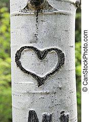 bark heart - heart carved in white aspen trunk bark