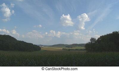 Field of Corn Timelapse