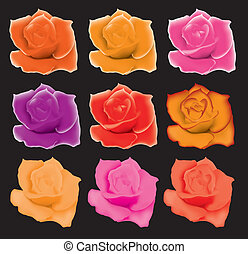 set of colorful roses