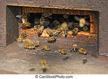 beehive - the bees at a beehive