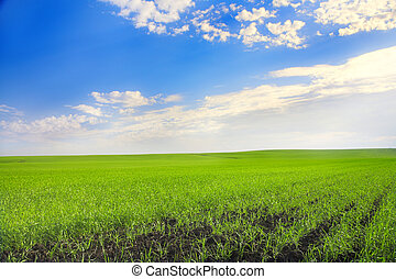 agricultural field - landscape with agricultural field and...