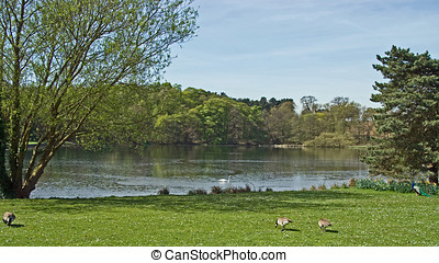 Lakeside View - Photo of a lakeside view