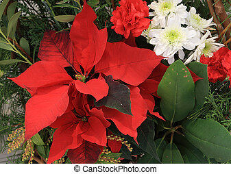 Christmas flower arrangement with red poinsettias and...