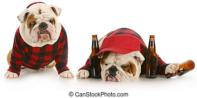 bêbado, cão