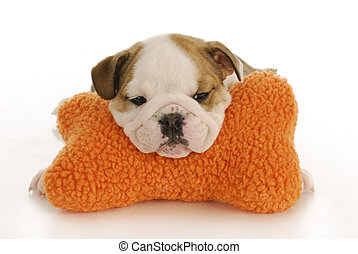 cute puppy - english bulldog puppy resting head on stuffed...