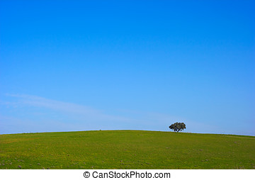 Alentejo plain Portugal in the beginning of spring