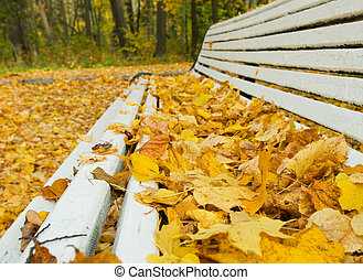 autumn leaves on the bench