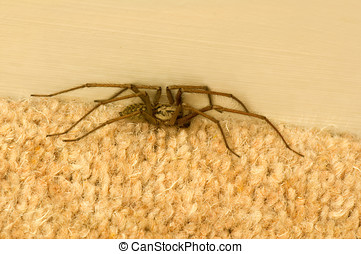 Spider on carpet - Photo of a large spider on the carpet