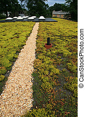 green roof top covered with sedum plants
