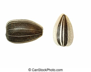 macro sunflower seeds isolated