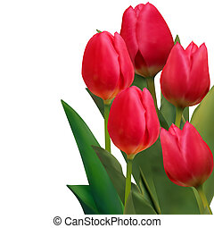 Beautiful red tulips card template. EPS 8 vector file...