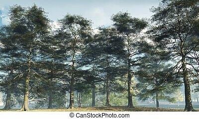 Misty Morning Ash Woodland - Illustrated ash tree woodland...
