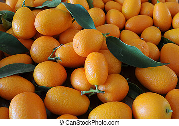 cumquat - close-up of freshly picked kumquats with green...