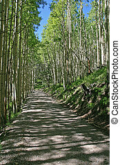 dirt road in aspen grove - vertical image of a dirt road...