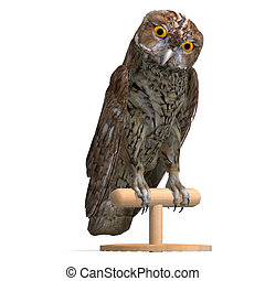 Tawny Owl Bird. 3D rendering with clipping path and shadow...