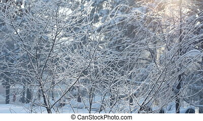 Frost, snowflakes and sunlight.