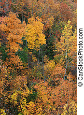 fall foliage - bright yellow and red fall foliage contrasted...
