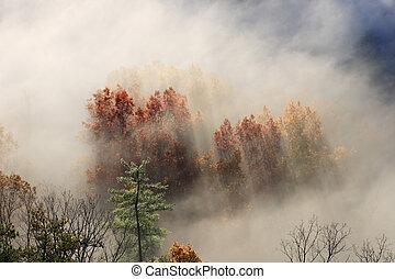 foggy tree tops