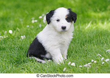 Puppies - cute puppies in the meadow in spring time