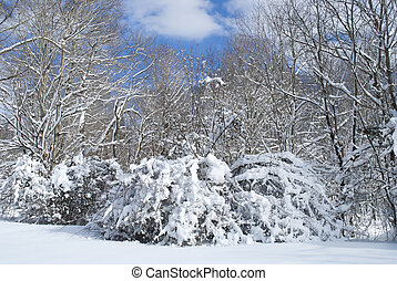 Snow Day - Freshly fallen snow on the brush with blue sky...