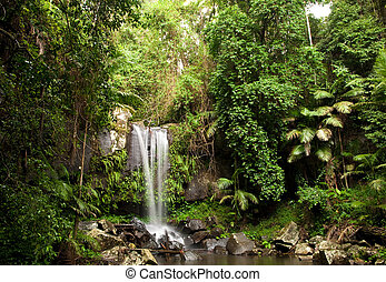 Rainforest Waterfall - Waterfall making its way into a pond...
