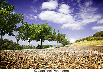 landscape with road and trees