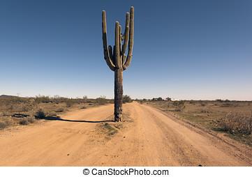 Cactus Road Arizona