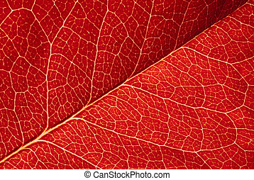 red leaf texture - highly detailed image of red leaf texture
