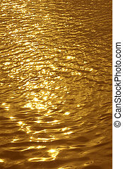 golden wavelet