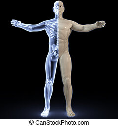 anatomy - part of the male body under X-rays. 3d image.