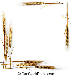spikelets - frame of golden spikelets. isolated on white....