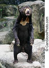 Black Bear in Zoo