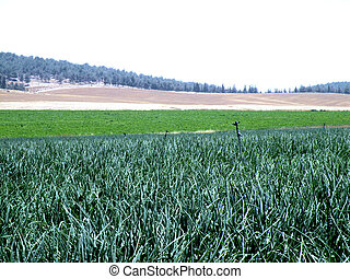 Agricultura, Plano de fondo
