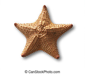 Starfish - starfish isolated on white with shadow and...
