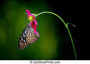 Tropical Rainforest Butterfly - Butterfly known...