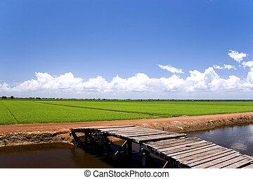Paddy Field - Paddy field of Sekinchan, Malaysia.