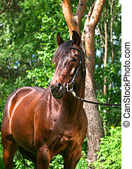 portrait of the bay horse